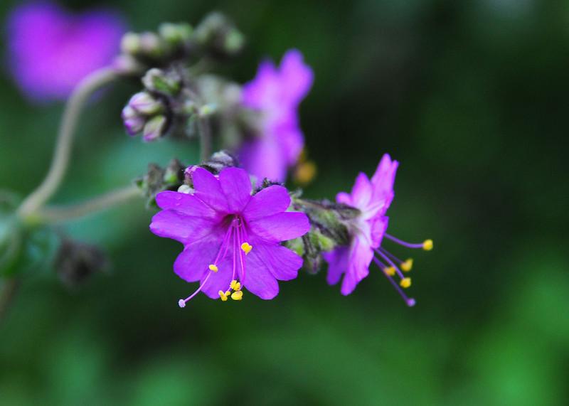 NEA_3012-7x5-Flower-adj.jpg