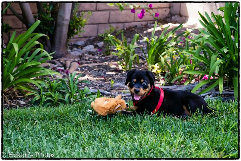 Bella-Cleo-Zoe-13.jpg