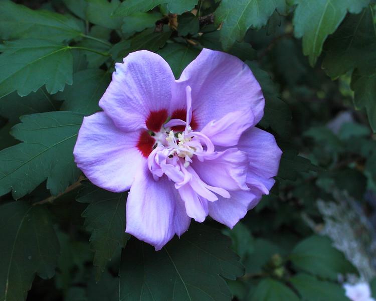 110722_6321 Flowers_0900r1a.JPG