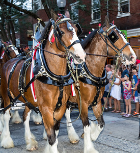West Chester Budweiser Clydesdales
