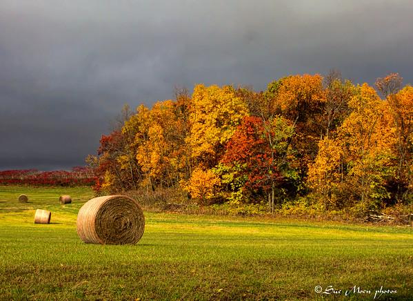 2014 Autumn