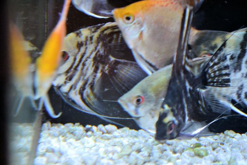 fish (6).jpg