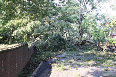 Tree work 2011