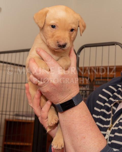 Weika Puppies 2 Mar 2019-8447.jpg