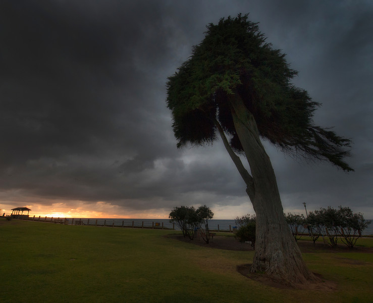 Seuss Tree La Jolla