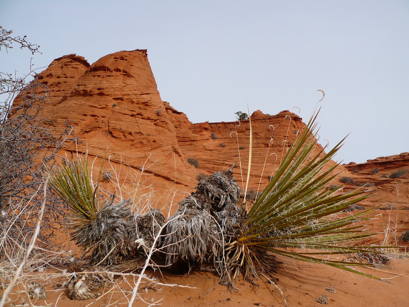South Coyote Buttes 15