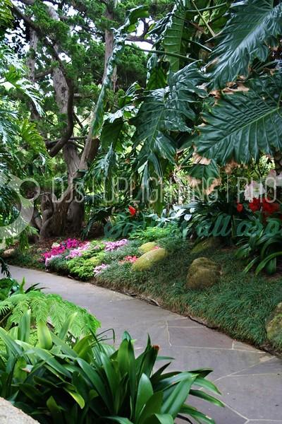Jungle Path_batch_batch.jpg