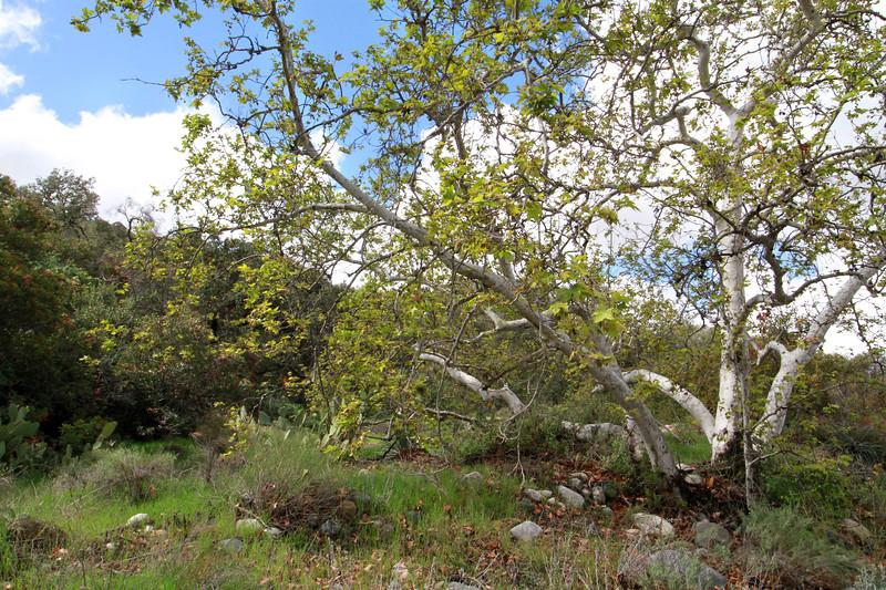32633-Trabuco-Canyon-Rd-Mitchell-East-Trabuco-Canyon_91.JPG