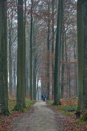 Overijse_Forest