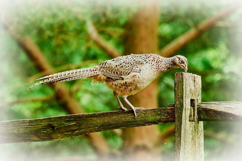 feeding bird.jpg
