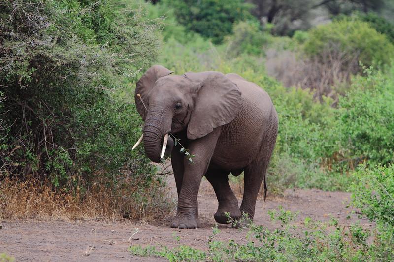 Elephant Lake Manyara.JPG