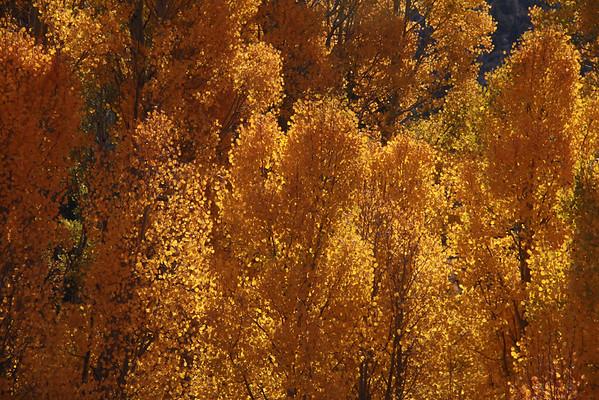 Sierra Nevada Fall 2014