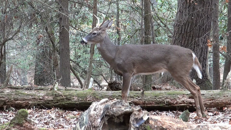 whitetail_bed_17.mov