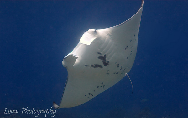 Manihi Scuba Diving