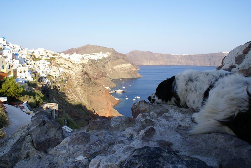 A dog's life, Oia, Santorini, Greece