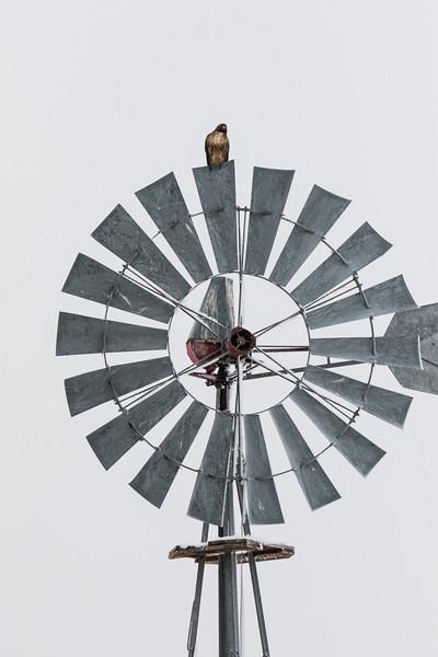Sierra Hawks Winter 2018-4.jpg