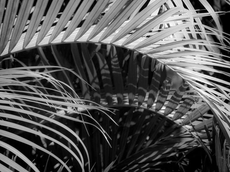 13 Palms - No. 10