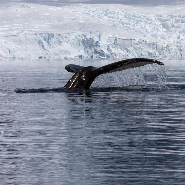 2019_01_Antarktis_03969.jpg