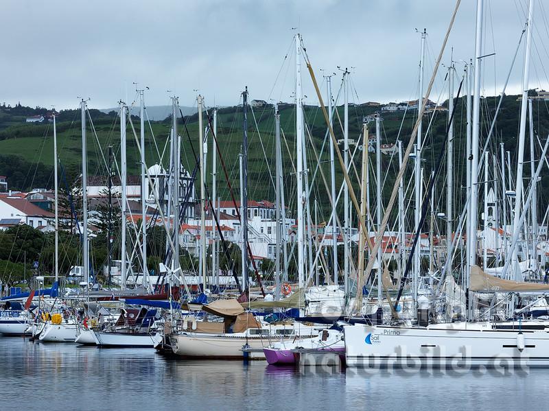 Segelboote im Hafen, Marina von Horta, Faial, Azoren, Portugal