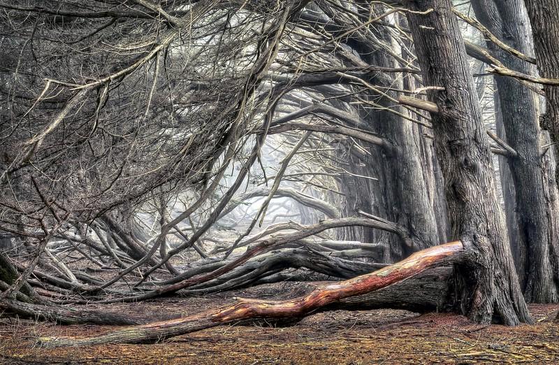 Del Mar Cypress Grove, Sea Ranch, California
