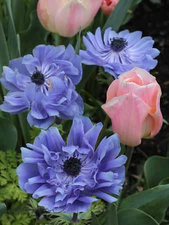 Duke Garden spring 17