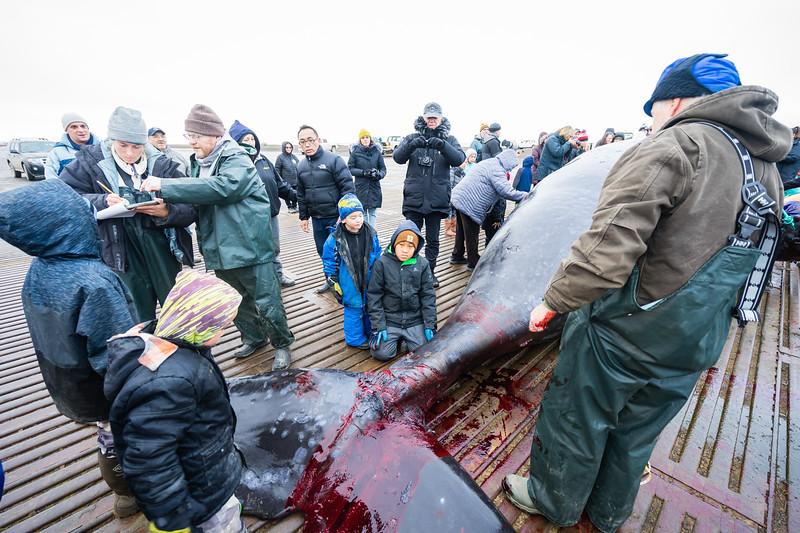 Utqiagvik Whaling-7002-Juno Kim-nw.jpg