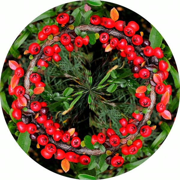 Colwick Berries~5663-1pcr.