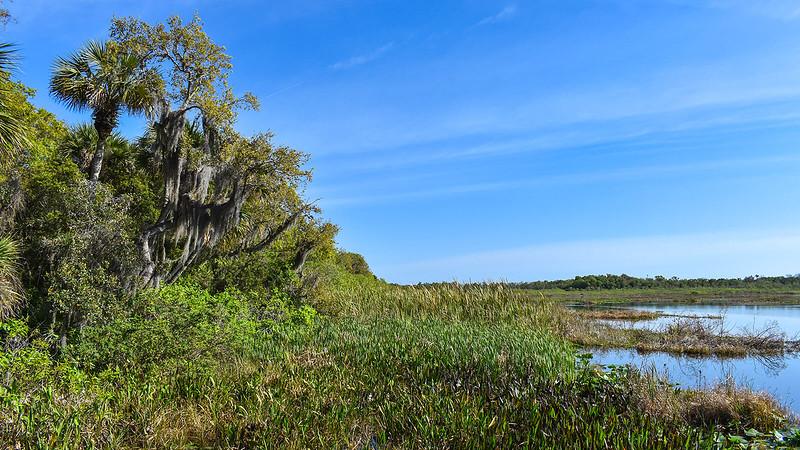 Marshy shoreline