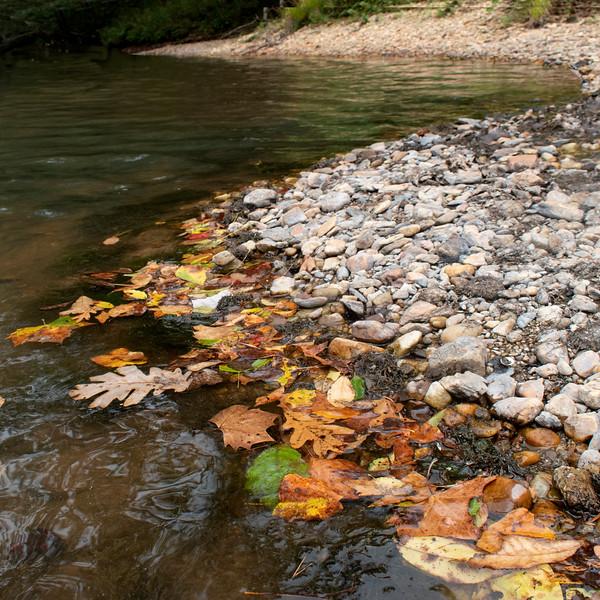 Leaves  on The Etowah River