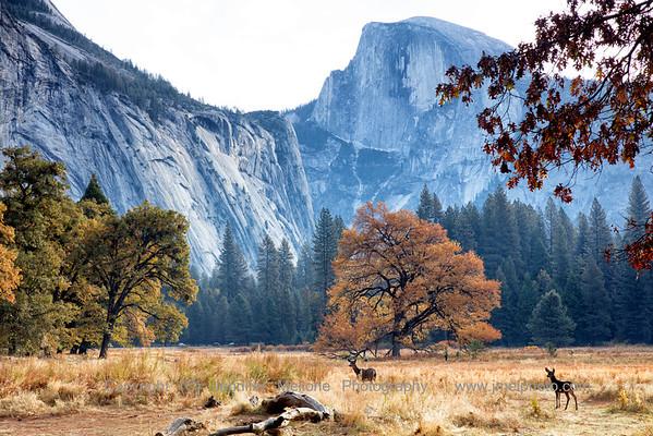 Yosemite - A Mild Autumn