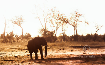 Hwange NP  Zimbabwe