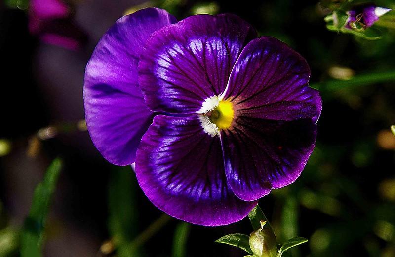 flower violet low.jpg