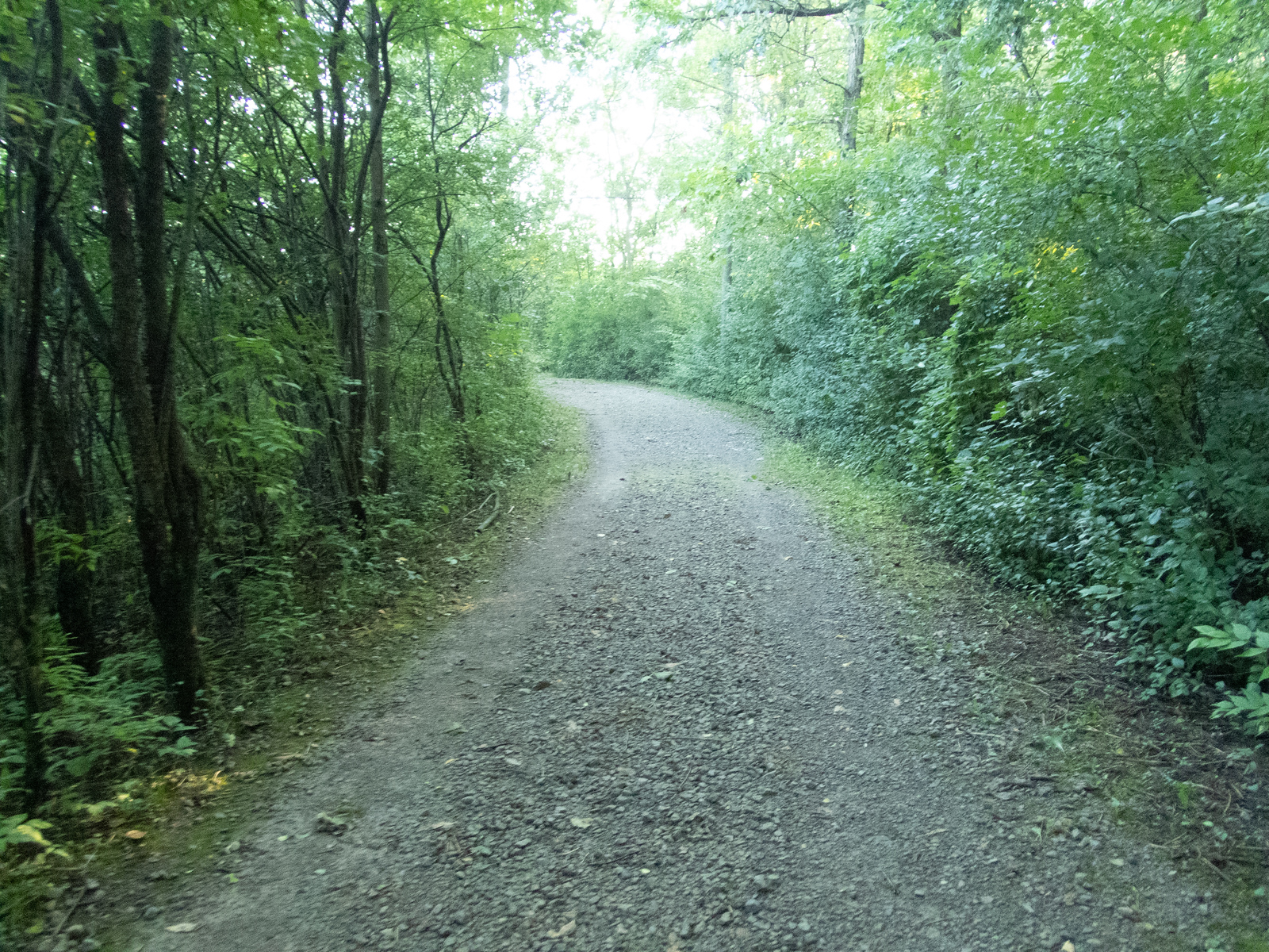 Lillie Park path