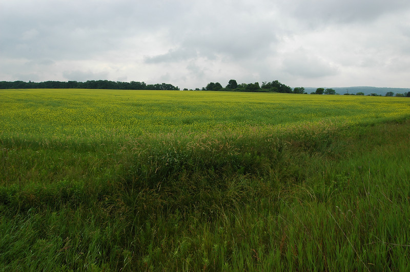 050705 7346 Canada - Elmvale - Heavenly Fields _E _L ~E ~L.JPG