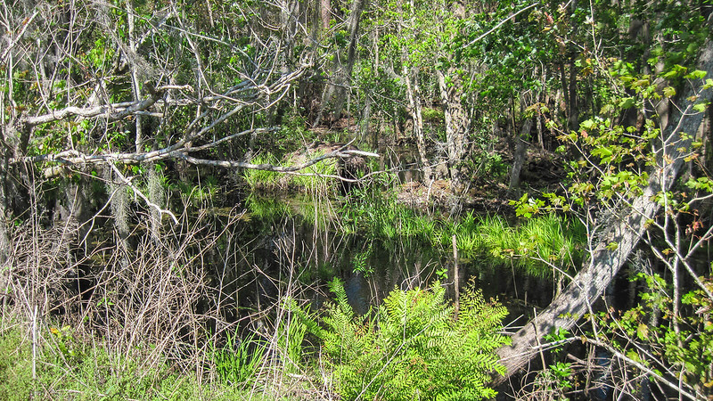 Canal with dark water and swamp vegetation