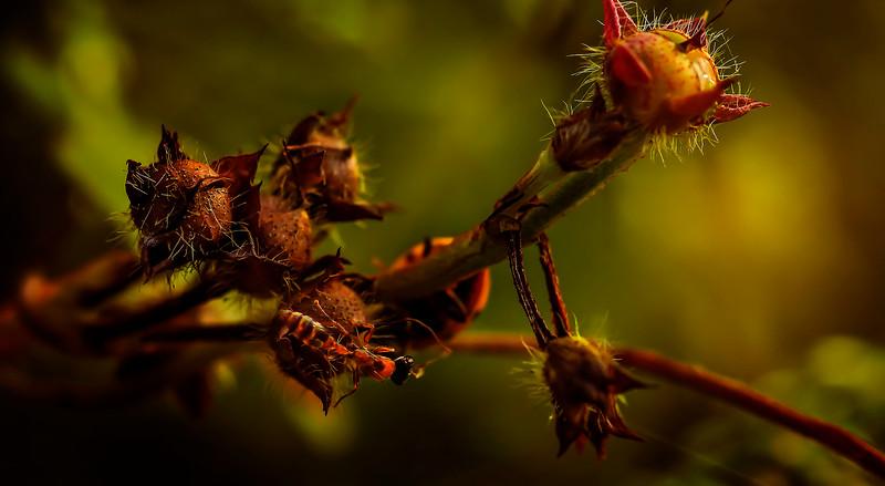 Bugs and Beetles - 121.jpg