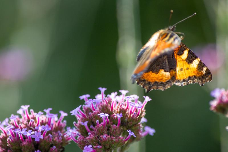 1407_eigen werk vlinders-0881.jpg