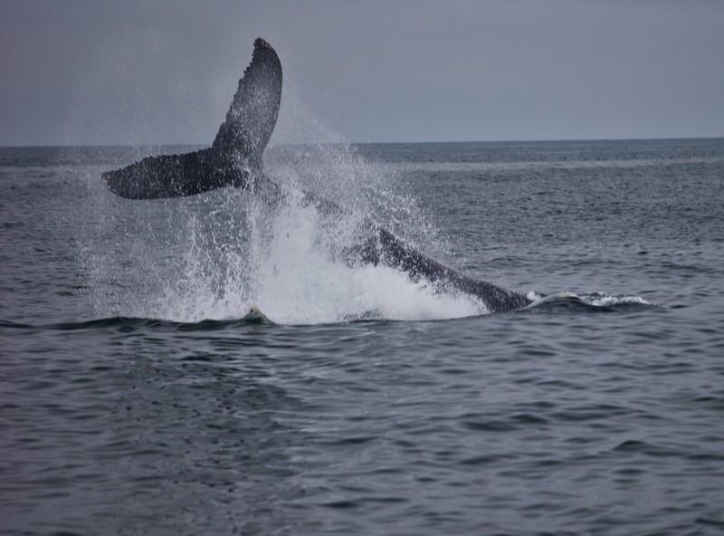 Whales2018-08-21 (8).jpg