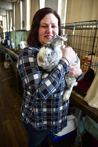 1/15/2020 Mike Orazzi | Staff Michelle Bosse, director of Every Bunny Counts, holds male bunny Baba Booey at their location in the Sessions Building on Riverside Avenue in Bristol on Wednesday.