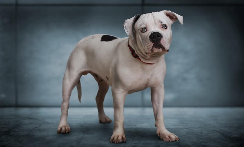 dog-prestige.jpg