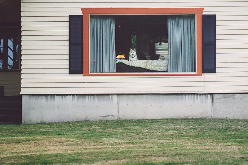 A dog perched on a couch observes the outside world. Seen in Anacortes, Washington.
