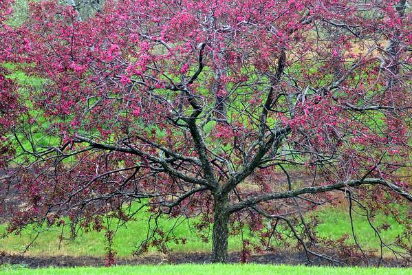 Flowering Trees and Vines