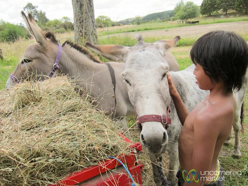 Young Boy with Donkeys - Raglan, New Zealand