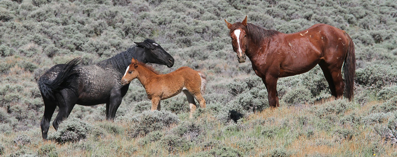 Mark Rasmussen Wild Horse Tours Images
