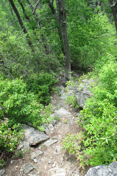 So steep is the trail here, this almost looks like an aerial photo...