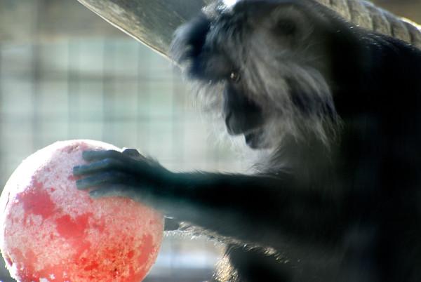 Toronto Zoo  with Meet Up Toronto