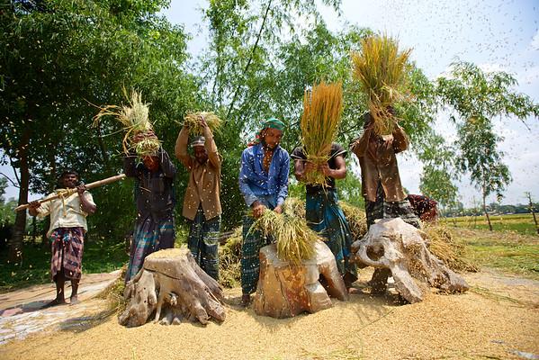 Harvest Plus-05-2015