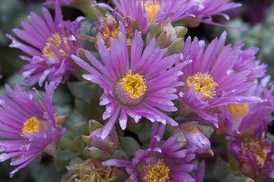Stanford's Arizona Cactus Garden (6/6/09)