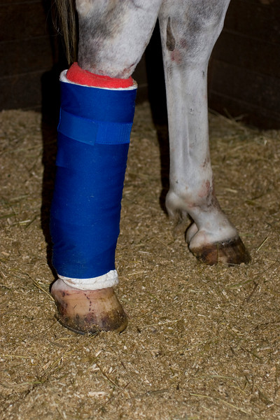 I given an A+ on bandaging by the Grande Dame, Doris Ward. :)