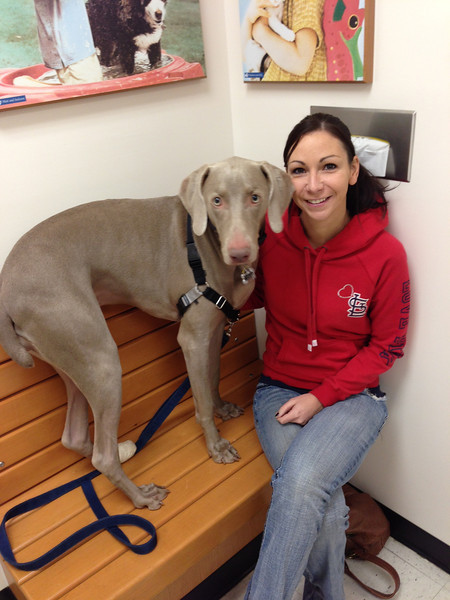 Always on the benches at the vet  We decided to take Yadi to the vet to make sure her incision is healing properly (because she's been so rough on it and we can't keep her off of it and calm for 2 weeks.  I mean, seriously...she's a one and a half year old Weimaraner!  It's impossible)  {January 04, 2013}